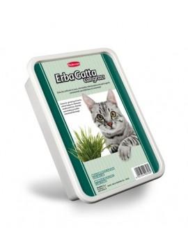 ERBAGATTA CAT GRASS | ERVA P/CULTIVAR EM CASA P/GATOS