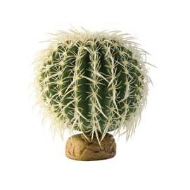 "PLANTA ""BARREL CACTUS"" MD."