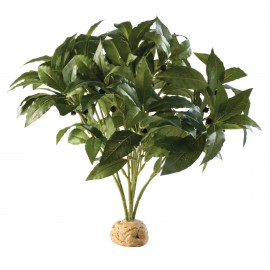 "PLANTA ""LAUREL BUSH"""